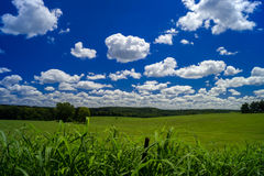 A rolling green field with white cumulus clouds Stock Images