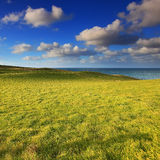 Simple landscape of green grass and blue sky Royalty Free Stock Image