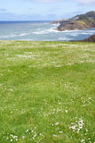 Rolling green meadows and Pacific Ocean Royalty Free Stock Image