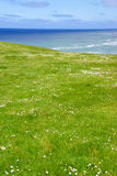 Rolling green meadows and Pacific Ocean Stock Photo