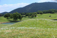 Rolling greens and water feature on a golf course Royalty Free Stock Photo