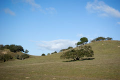 Rolling Groene Heuvels Stock Foto