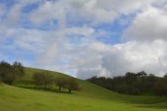 Rolling groene heuvels met mos behandelde eiken bomen Stock Afbeeldingen