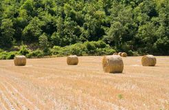 Rolling haystack in countryside. Royalty Free Stock Photo
