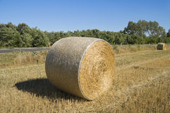 Rolling haystacks. Royalty Free Stock Photo
