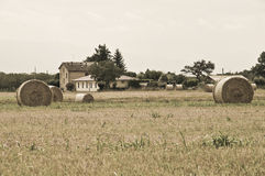 Rolling haystacks. Royalty Free Stock Photography