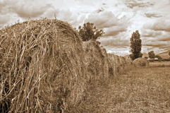 Rolling haystacks in countryside. Stock Images