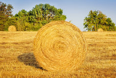 Rolling haystacks in countryside. Royalty Free Stock Photography