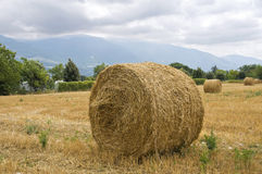Rolling haystacks. Stock Images