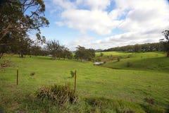 Rolling heuvels en vee die Zuidelijke Hooglanden Australië weiden Stock Afbeelding