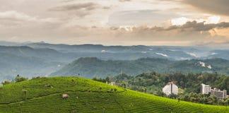 Rolling heuvels over een theetuin stock afbeelding