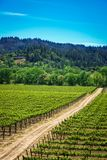 Rolling heuvels van de wijngaarden van Californië royalty-vrije stock foto