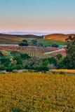 Rolling Heuvels van Napa Californië Stock Fotografie