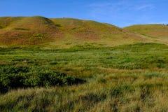 Rolling heuvels in westelijke hoog-grasprairie Stock Afbeelding