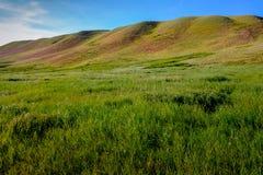 Rolling heuvels in westelijke hoog-grasprairie Stock Foto