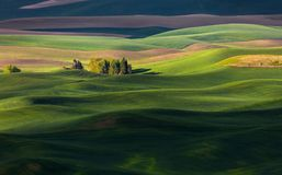 Rolling hill and Farm Land. Green wheat fields Royalty Free Stock Images