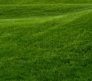 Rolling Hill of Green Grass Square Royalty Free Stock Images
