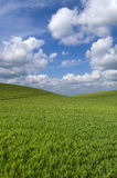 Rolling hill landscape Stock Photography