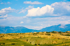 Rolling Hill Vineyards Royalty Free Stock Photo