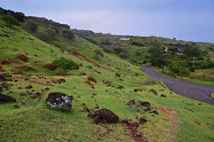Rolling Hill of wide grassland with screwpine trees & small narrow road at Rodrigues Island, Mauritius Royalty Free Stock Images