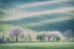 Rolling Hills, деревья и поле зеленой травы Стоковая Фотография RF