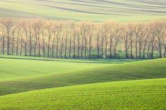 Rolling Hills, деревья и поля зеленой травы Стоковое Фото