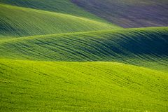 Rolling Hills зеленых пшеничных полей Изумительное fairy minimalistic Стоковая Фотография