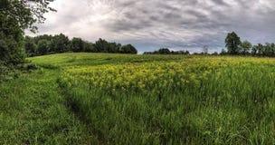 Rolling Hills с полевыми цветками Стоковые Фото