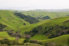 Rolling hills. And the Pacific Coast near Templeton, California Stock Image