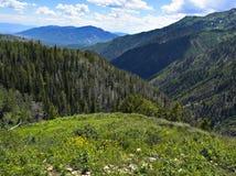 Rolling Hills - 2 image libre de droits