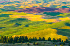 Rolling Hills Photo stock