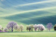 Rolling Hills Стоковое фото RF