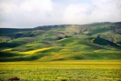 Rolling Hills Стоковые Изображения