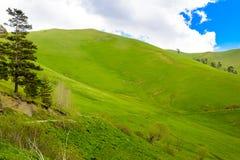 Rolling Hills Stockbilder