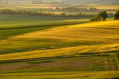 Rolling Hills auf Sonnenuntergang Landwirtschaftliche Landschaft Grünfelder und Ackerland, neue vibrierende Farben Lizenzfreie Stockfotografie