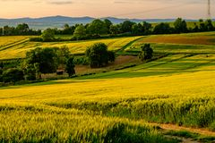 Rolling Hills auf Sonnenuntergang Landwirtschaftliche Landschaft Grünfelder und Ackerland, neue vibrierende Farben Lizenzfreies Stockfoto