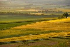 Rolling Hills auf Sonnenuntergang Landwirtschaftliche Landschaft Grünfelder und Ackerland, neue vibrierende Farben Stockbilder