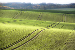 Agrarian rolling hills in autumn Stock Photo