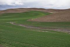 Rolling Hills av Palousen Arkivbild