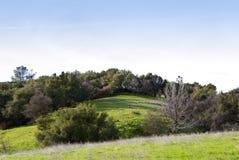 Rolling Hills avec des chênes et des herbes de source Photos libres de droits