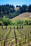 Rolling hills of California vineyards. Vineyards on the beautiful rolling hills near Alexander Valley California stock image