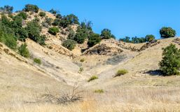 Rolling hills and canyon in the Santa Monica Mountains of California. Rolling hills and canyon covered with golden grasses and green trees in the Santa Monica Royalty Free Stock Images