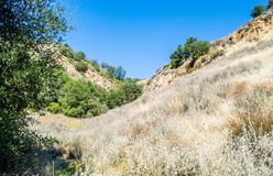 Rolling hills and canyon in the Santa Monica Mountains of California. Rolling hills and canyon covered with golden grasses and green trees in the Santa Monica Stock Photography