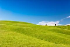 Rolling Hills con gli alberi ed i cieli blu, Toscana, Italia Fotografie Stock