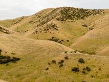Rolling Hills con il pascolo del pascolo delle pecore, NZ Fotografie Stock Libere da Diritti