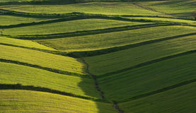 Rolling Hills Cover By Lush Grass Stock Photography