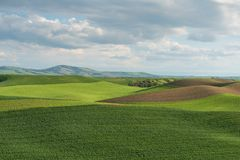 Rolling hills. Covered in wheat fields, Pullman, Washington Royalty Free Stock Image