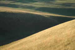 Rolling Hills at Dawn Stock Photo