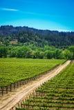 Rolling Hills delle vigne di California fotografia stock libera da diritti