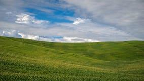 Rolling Hills do Palouse Fotografia de Stock